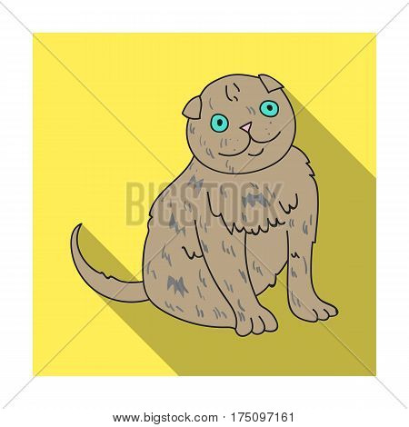 Scottish Fold icon in flat design isolated on white background. Cat breeds symbol stock vector illustration.