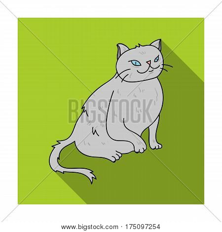 York Chocolate icon in flat design isolated on white background. Cat breeds symbol stock vector illustration.