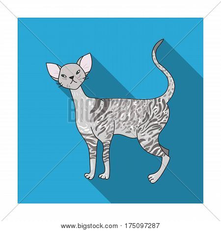 Cornish Rex icon in flat design isolated on white background. Cat breeds symbol stock vector illustration.