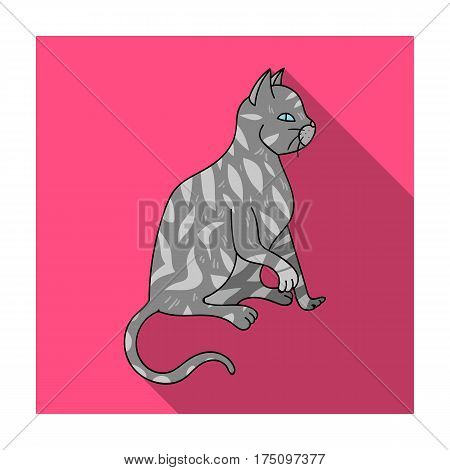 American Shorthair icon in flat design isolated on white background. Cat breeds symbol stock vector illustration.