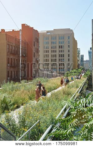 Green Highline Park In New York City