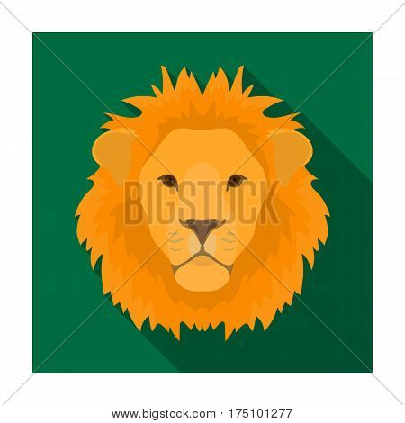 Lion icon in flat design isolated on white background. Realistic animals symbol stock vector illustration.