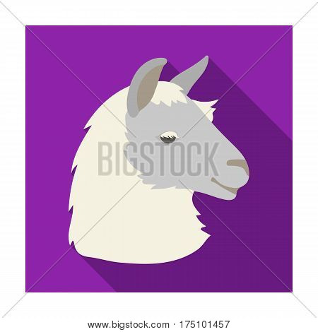 Lama icon in flat design isolated on white background. Realistic animals symbol stock vector illustration.