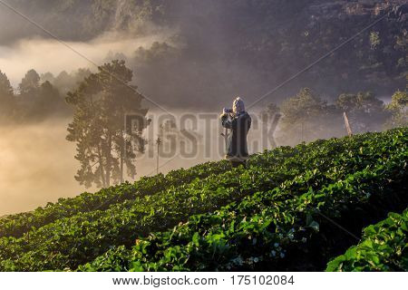 Asian traveler take a photo misty morning sunrise in strawberry garden View of Morning Mist at doi angkhang Mountain Chiang Mai Thailand
