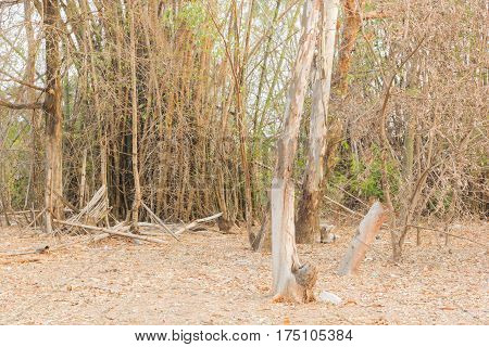 dry forest of countryside in countryside of thailand