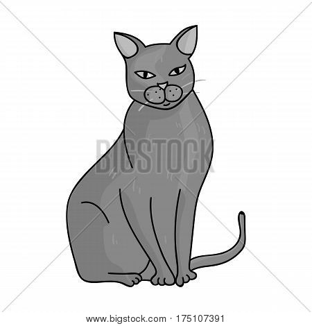 Chartreux icon in monochrome design isolated on white background. Cat breeds symbol stock vector illustration.