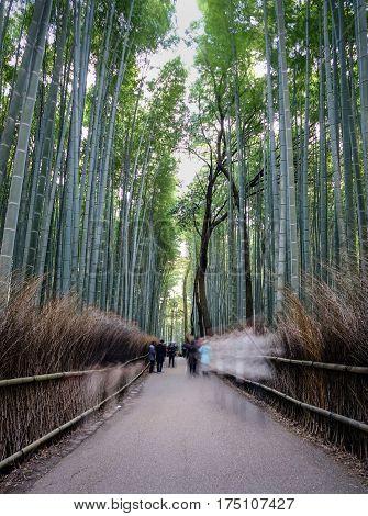 Bamboo Grove At Arashiyama In Kyoto, Japan