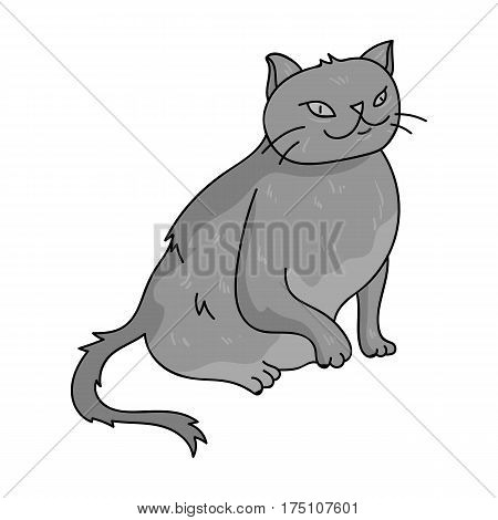 York Chocolate icon in monochrome design isolated on white background. Cat breeds symbol stock vector illustration.