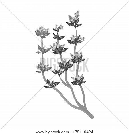 The Mongolian medicinal plant Artysh.Symbol of Mongolia.Mongolia single icon in monochrome style vector symbol stock web illustration.
