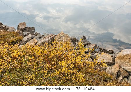 Cumulus clouds reflecting in a clear mountain lake along the Beartooth Highway with bright yellow leaves and multi-colored rocks along the edge of the lake