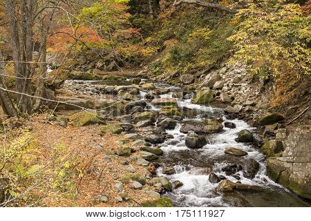 Brook flowing among many stones beside fallen leaves in autumn