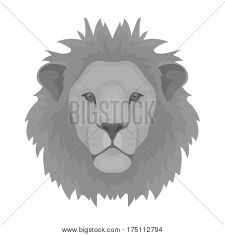 Lion icon in monochrome design isolated on white background. Realistic animals symbol stock vector illustration.
