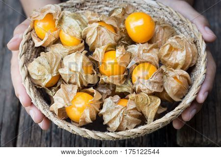 Cape gooseberry in a basket,Basket in hand with cape gooseberry