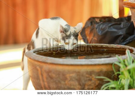 The cat is drinking, The cat is drinking water to quench his thirst