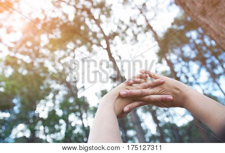 Happiness relaxation with early morning concept. Woman hands up in fresh air at pine forest background with sunlight.
