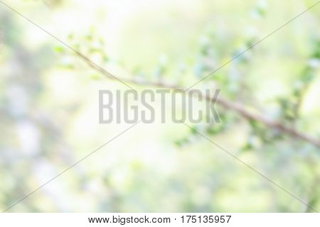 Spring natural background defocused branch with geen leaves
