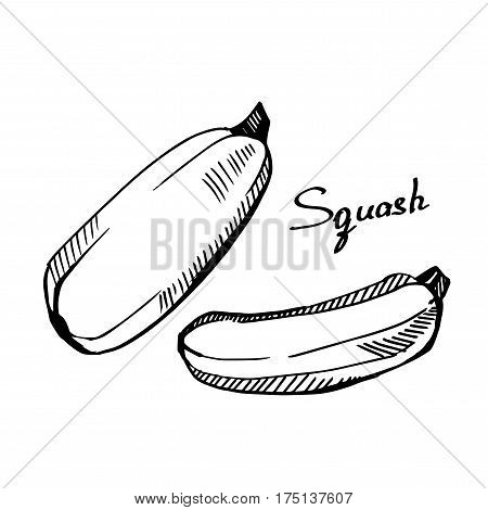 Squash. Monochrome illustration on a light background. Hand-drawn.