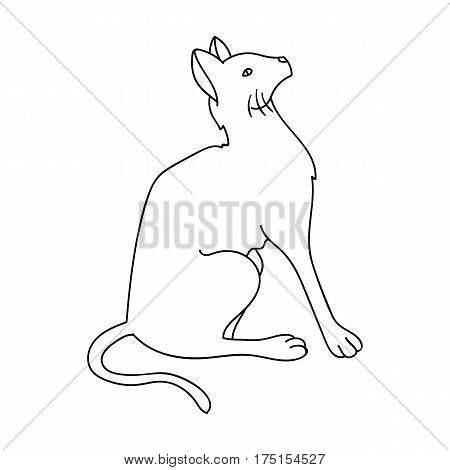 Siamese icon in outline design isolated on white background. Cat breeds symbol stock vector illustration.