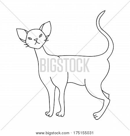 Cornish Rex icon in outline design isolated on white background. Cat breeds symbol stock vector illustration.