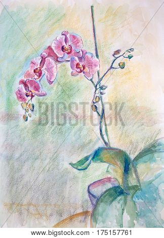 Still Life With Gently Pink Orchids
