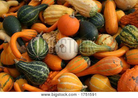 Autumn Squash Close-Up 2