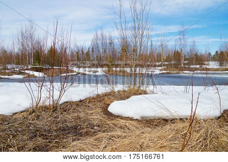 Spring landscape with melting snow and thawed patches in forest