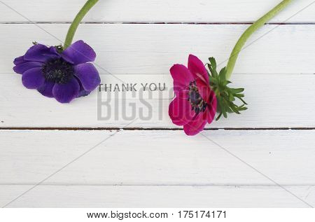 A simple thank you composition of two anenome flowers , pink and deep purple , on white wooden painted plank with metal sign ,. A showing of appreciation, mother's day , gift