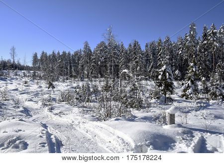Winter and snow in the forest and a snowmobile track and a blue sky picture from the North of Sweden.