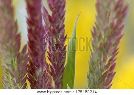 Unidentified Wild Grass