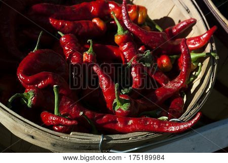 A red chili peppers sit in a basket at a farmer's market on a summer day.