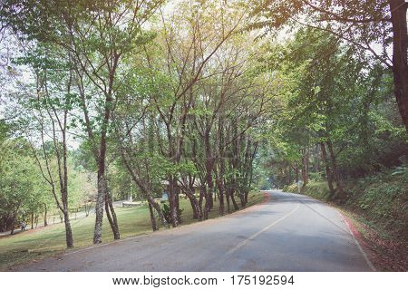 curve asphalt road with tree sideway in forest.