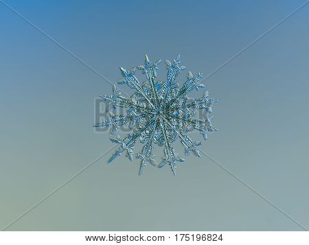 Macro photo of real snowflake: rare snow crystal with twelve ornate arms with spear-like ends and fine symmetry, glittering on smooth blue - gray gradient background.