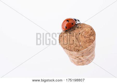 Beautiful Red Ladybug Walking On A