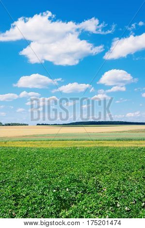 Rural scenic landscape with blue sky with clouds.