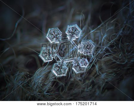 Macro photo of real snowflake: medium size snow crystal (around 4 millimeters from tip to tip) with big, transparent central hexagon and six short, broad arms with complex pattern inside. Snowflake glowing on dark gray wool background in natural light