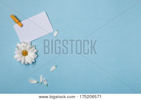 Spring top view composition: business / credit / visiting card mockup with clothespin white flower with yellow heart from left side scattered petals around. Sky blue background with copy space for text. Flat lay.