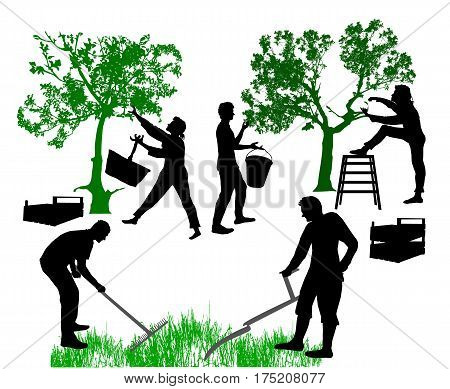 Family of farmers harvested fruits and working in the garden. Silhouettes of man moving grass with scythe and women harvesting fruits
