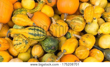 mixed pumpkins on a pile in a wooden basket