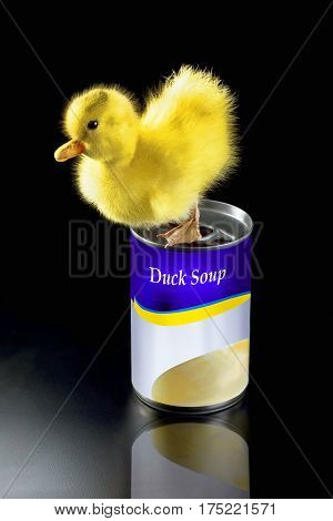 Duck soup with baby ducky on top of canned soup.