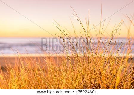 Shallow depth of field grass landscape with view of beach coastline at sunset with yellow light at Hellestø beach outside Stavanger, Norway