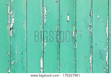 Green aged painted wooden wall useful as background