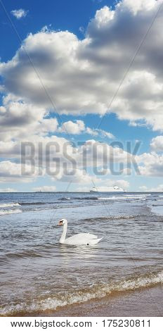 Swan On Water And Ferryboat In Distance, Travel Concept.