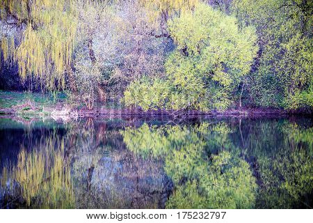 On the river Ros. landscape. spring. tree.