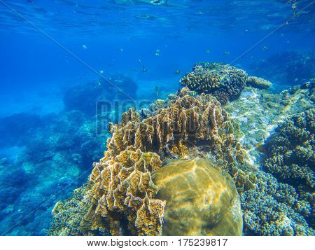 Undersea landscape with oceanic animals. Undersea wildlife in exotic island seashore. Tropical sea lagoon with huge corals. Bright coral reef close photo. Snorkeling scene of exotic island seashore