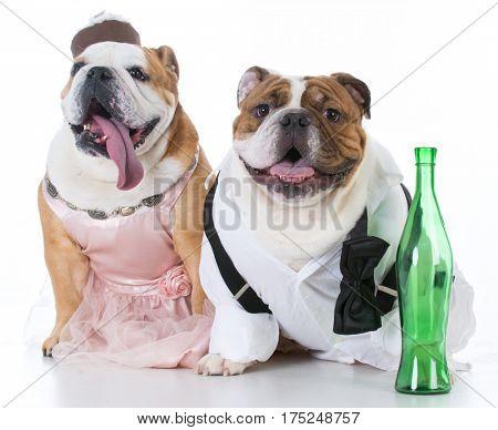 drunk dog couple with wine on white background