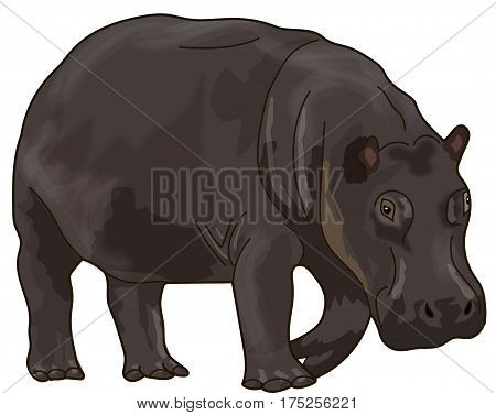 The brown hippo on a white background.