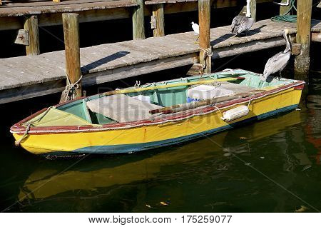An old colorful wooden rowboat is docked with two sets of oars, ropes, and a cooler is in a setting shared with pelicans, and an egret.