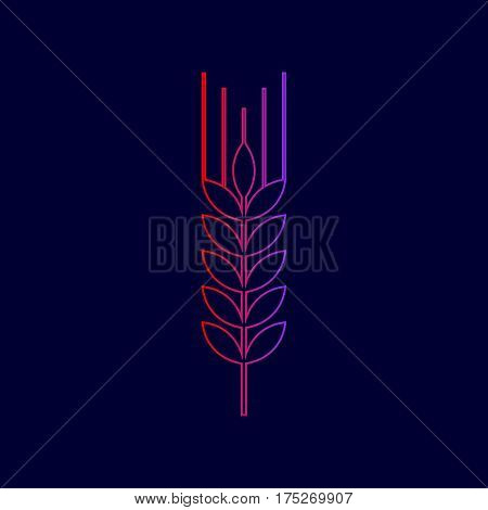 Wheat sign illustration. Spike. Spica. Vector. Line icon with gradient from red to violet colors on dark blue background.