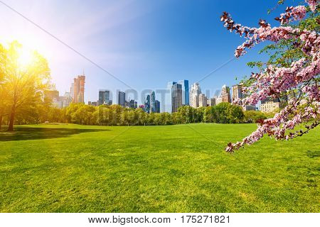 Central park at spring sunny day, New York City