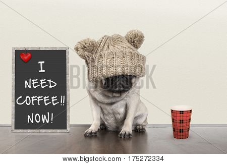 cute pug puppy dog with bad morning mood sitting next to blackboard sign with text I need coffee now copy space